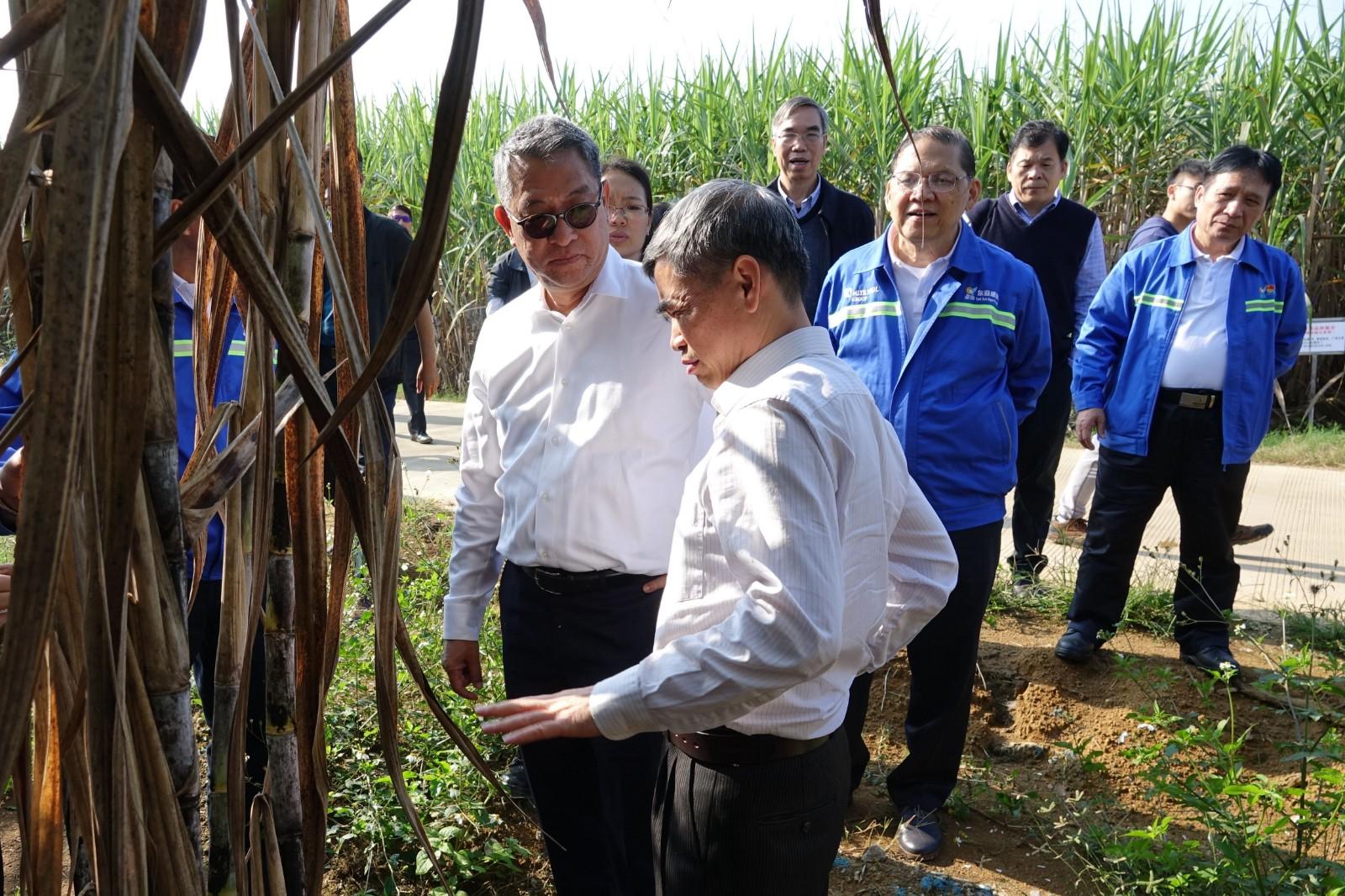 吉沙纳副主席(左三)和林家乐总裁(左一)对甘蔗品种改良推广提出建议图片